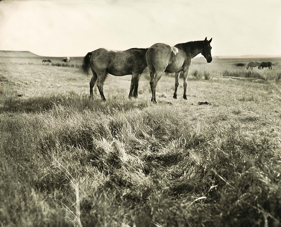 2et plate image of Nakota horses
