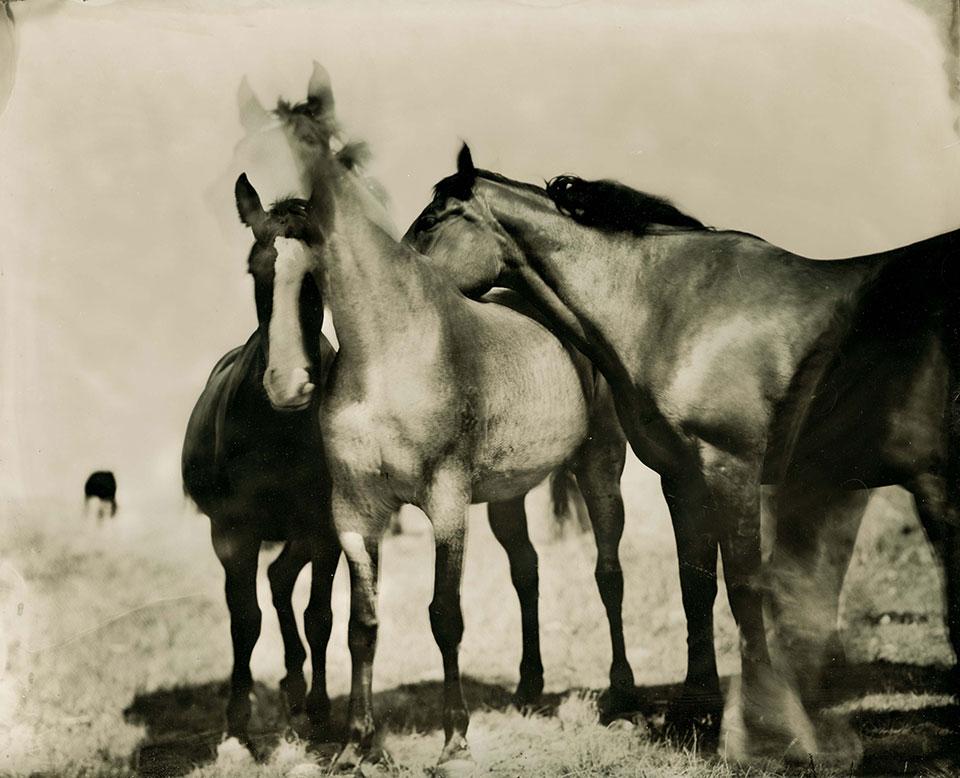 wet plate image of Nakota horses