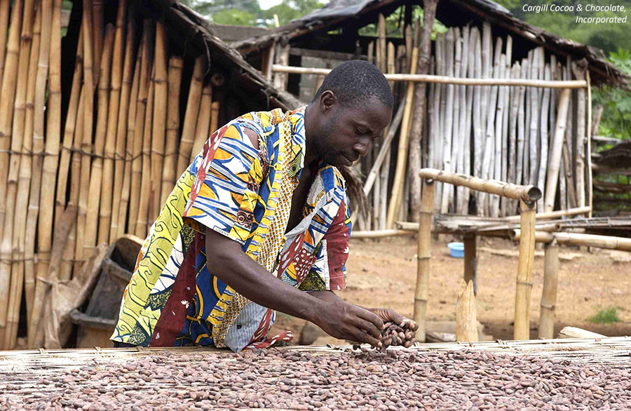 Man with table of cocoa beans