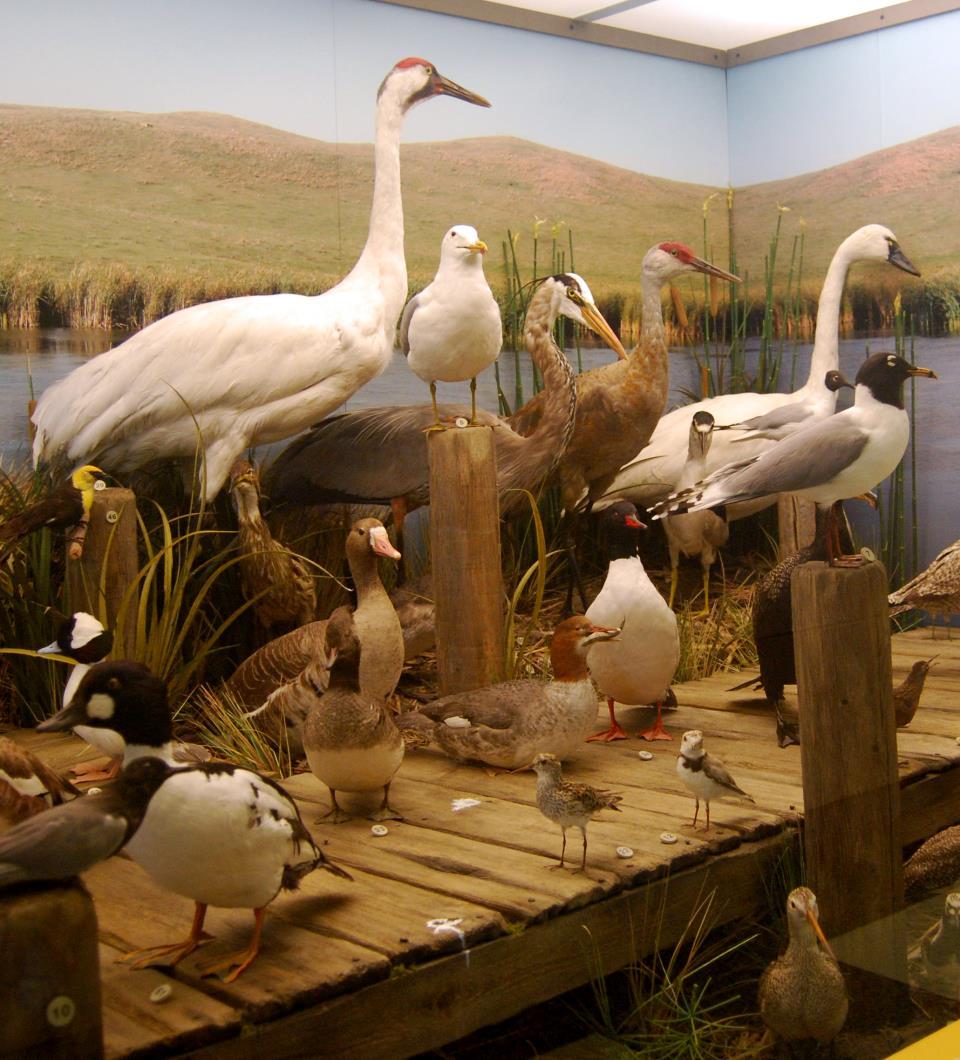Birds of North Dakota exhibit photo