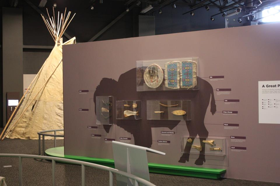 Innovation Gallery: Early Peoples Bison Exhibit