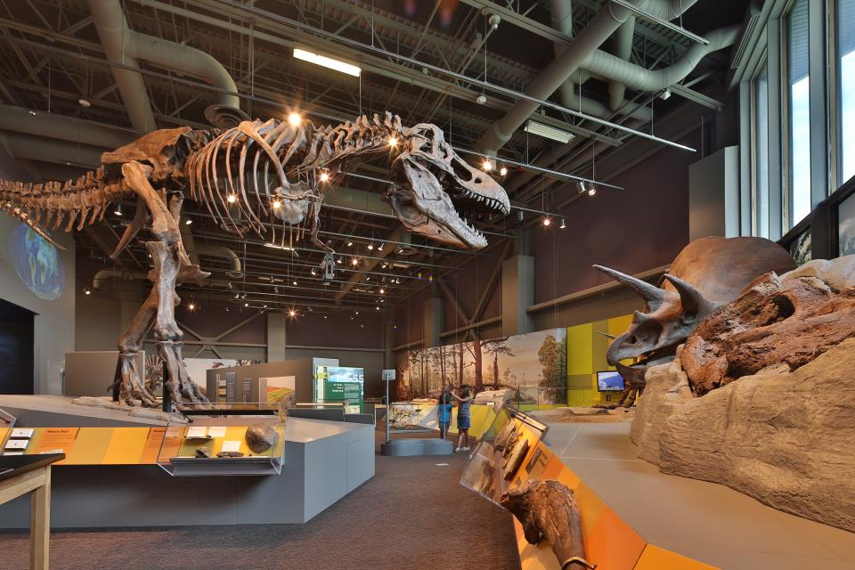 Adaptation Gallery: Geologic Time