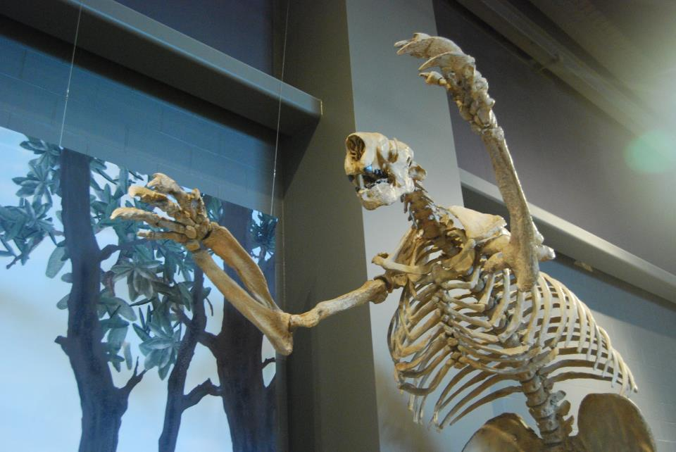 Skeleton cast of the 8-foot tall ground sloth Megalonyx