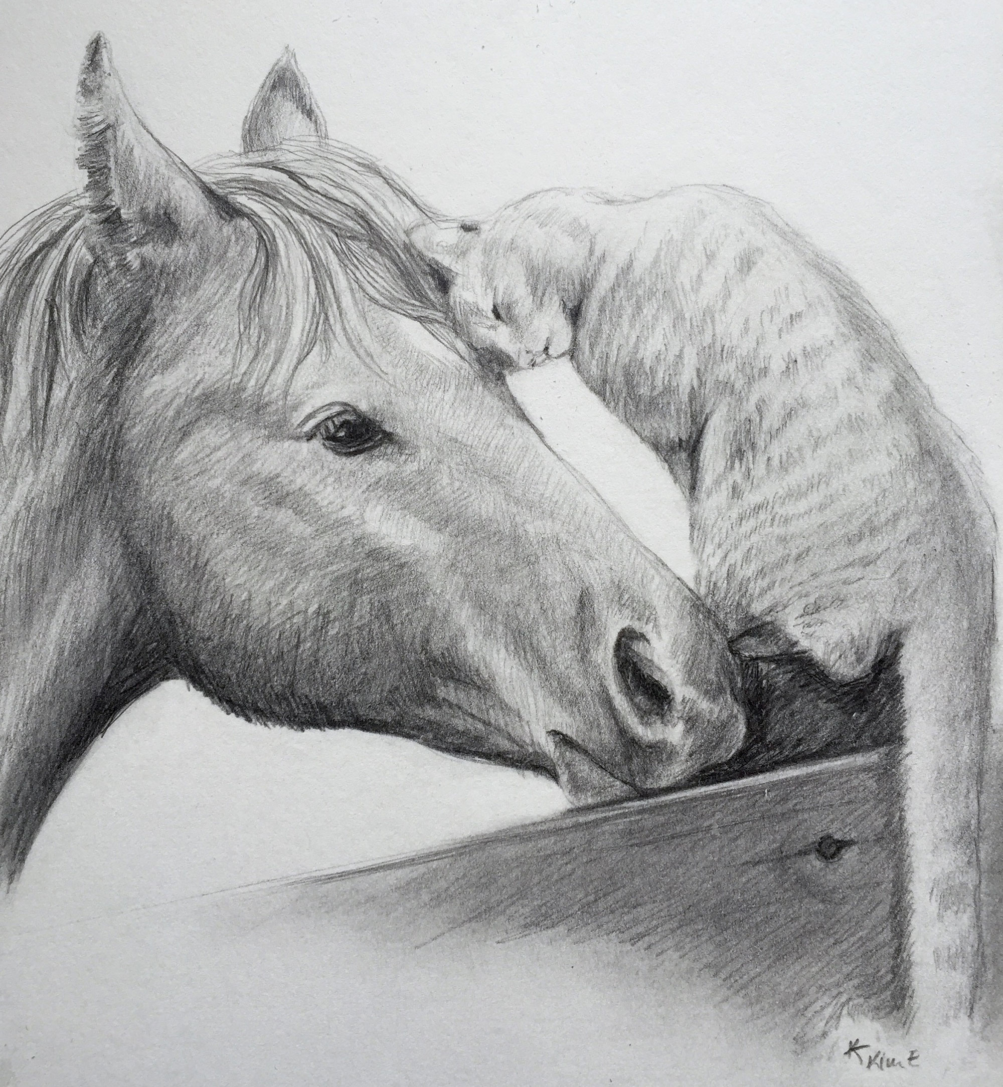 sketch of horse head and cat with its head against the horse