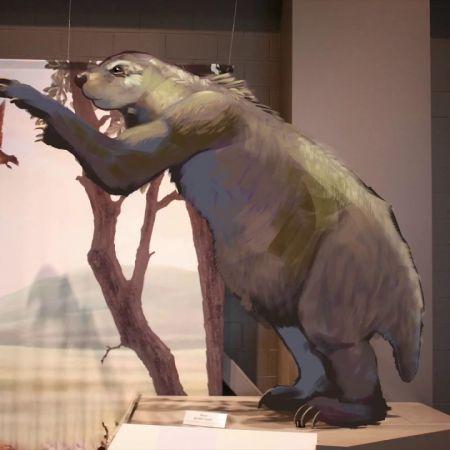 """Ground Sloth """"Megalonyx"""" Animation"""
